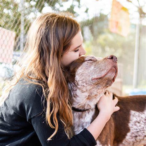 covid animal shelter preparedness guide lifesaving