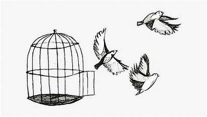 Freedom Drawing Birds Cage Flying Clipart Clipartkey