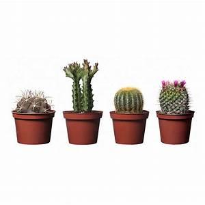 IKEA-cactus-plants Home Designs Project