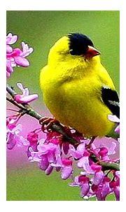 1080p Images: Bird Beautiful Wallpaper Hd 1080p Free Download