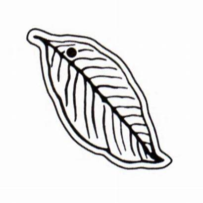 Tobacco Clipart Leaves Clip Leaf Touch Sof