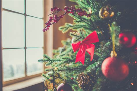 choosing the best christmas tree for your family