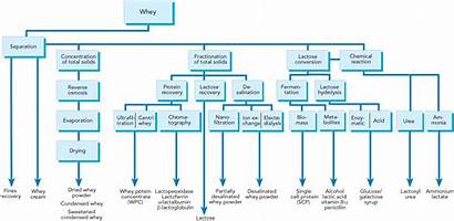 Whey Processing Protein Cheese Acid Dairy Composition