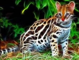 Ocelot 3d Wallpaper HD Desktop Wallpapers 4k HD