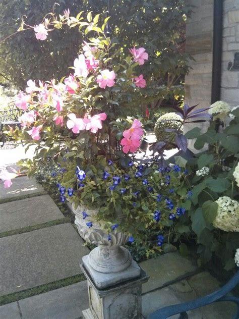 summer planter ideas summer planter part sun urn and planter ideas