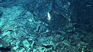 Amazing Creatures of Galapagos Hydrothermal Vents ...