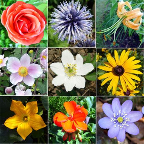 flower kinds with pictures flower types structure flower