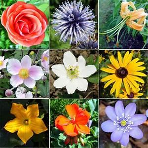 Flower Types - Structure Flower