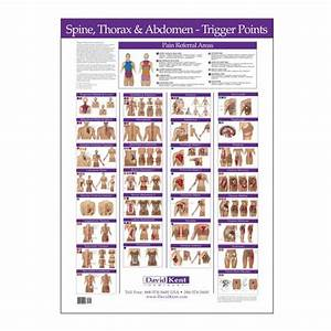 Trigger Point Chart Free