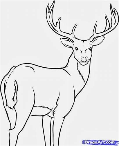 Deer Draw Animals Step Grade Class Homework