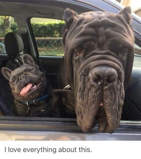 big dog small dog  head   car window luvbat