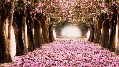 Spring Widescreen Tree Wallpapers Baltana Resolution Nature