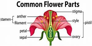 Flower Stigma