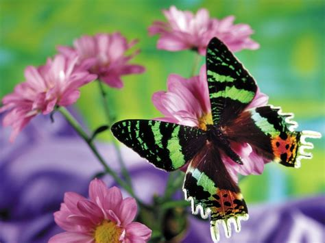 Animated Butterfly Wallpaper Moving - free butterfly wallpaper animated wallpapersafari