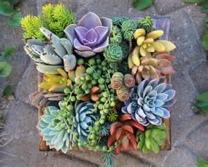 gift ideas succulent vertical succulent garden noveltystreet