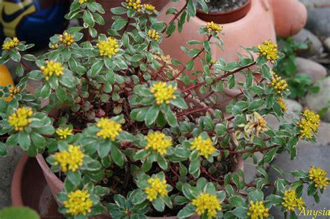 exceptional plantes grasses d exterieur 7 quelques