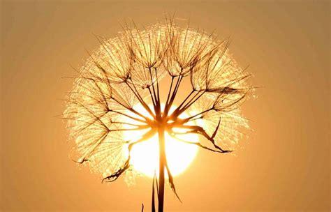 seeds of light seeds of light building bridges