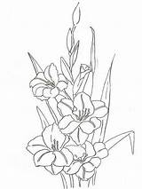 Coloring Gladiolus Pages Flower Flowers Printable Colors Recommended sketch template