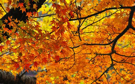 fall autumn ever leaf foliage favorite istockphoto wallpapers travel