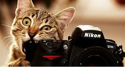 Screen Dual Funny Cats Monitor Cat Backgrounds