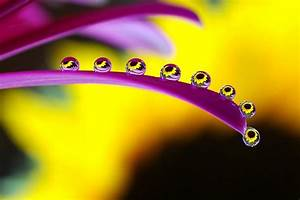 Picture Of The Day  Droplet Like It U2019s Hot