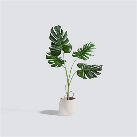 kitchen design monstera plant triangle form 3d models