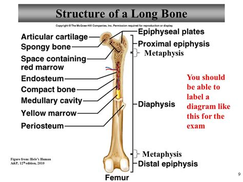 12 photos of the long bone labeled. Label the major structures of this long bone femur IAMMRFOSTER.COM