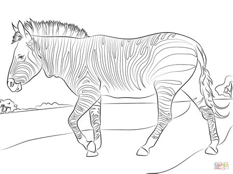 mountain zebra coloring page  printable coloring pages