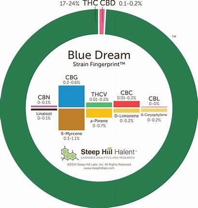 Dream Strain Guide Cbd Leafly Marijuana Thc
