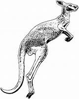 Kangaroo Drawing Pages Coloring Animals Clipart Jumping Printable Cliparts Getdrawings Clip Clipartmag Library sketch template