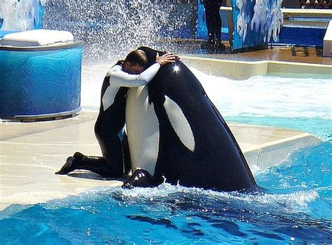 Orcas And Dolphins In Captivity