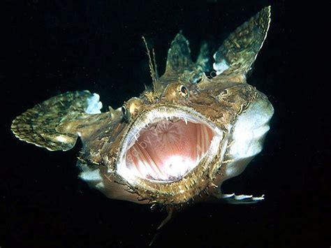 anglerfish ocean treasures memorial library