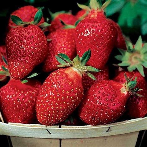 Ft Laramie Strawberry   30020   Hanging Baskets and