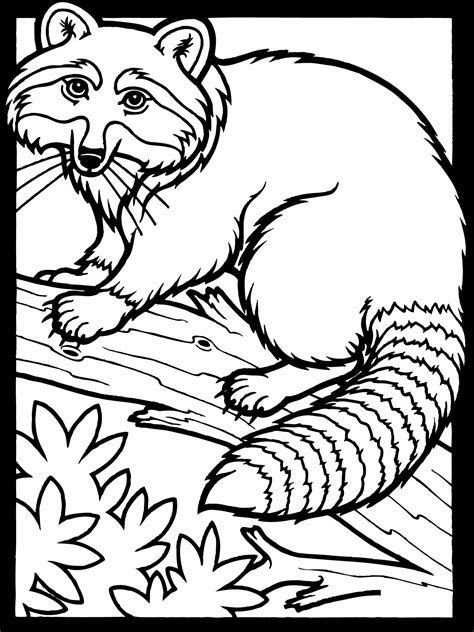printable raccoon coloring pages  kids