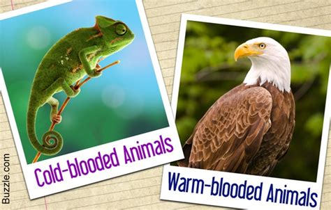 difference   cold blooded  warm blooded animals