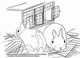 Coloring Hutch Baby Cute Bunnies Polish Rabbit Pages Rabbits Country Seasonal Smarties Creative sketch template