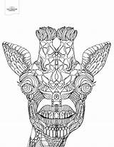 Coloring Pages Giraffe Adult Printable Adults Toothy Animal Advanced Books Dental Cusp Teeth Radiology Offthecusp Prints Templates Version Patterson Template sketch template