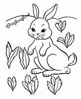 Rabbit Coloring Children Pages Simple sketch template