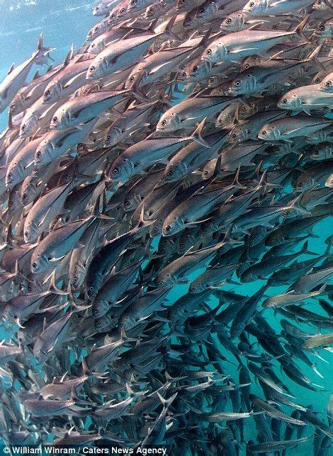 A school of fish swimming past in the Cabo Pulmo marine ...