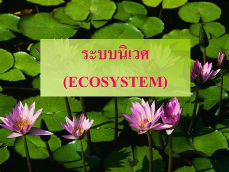 PPT - ระบบนิเวศ ( ECOSYSTEM) PowerPoint Presentation - ID:1487849