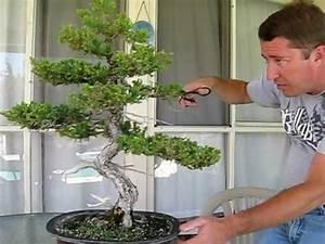 Bonsai Pflege Für Anfänger : 188 besten bonsai gestaltung pflege bilder auf pinterest bonsai g rtnern und pflanzen ~ Frokenaadalensverden.com Haus und Dekorationen