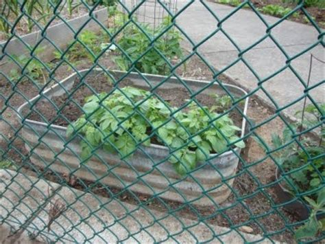 images  raised gardenbeds  pinterest