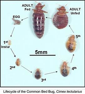 how to get rid of bed bugs naturally five spot green living With can bed bugs come from outside