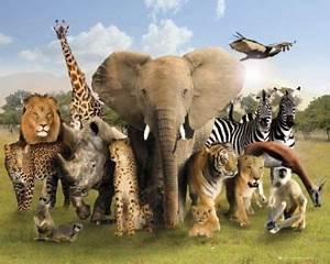Zwierzęta Afryki - plakat - Opinie i atrakcyjne ceny na ...