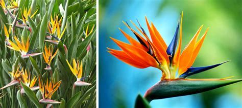 Cute Bird Of Paradise Flower ? WeNeedFun