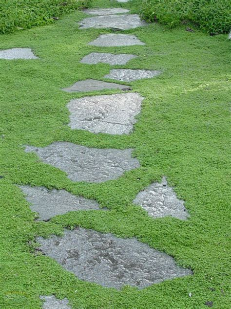 lawn replacement ideas which plants to use as lawn alternative diy landscaping landscape design ideas plants