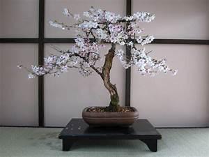 Pflege Von Bonsai Bäumchen : bonsai baum kaufen und richtig pflegen einige wertvolle tipps ~ Sanjose-hotels-ca.com Haus und Dekorationen