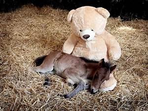 the, cutest, mini, horses, you, u0026, 39, ve, ever, seen