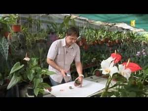 Comment Entretenir Un Cactus : 15 astuce jardinage comment r aliser un cactus greff ~ Nature-et-papiers.com Idées de Décoration