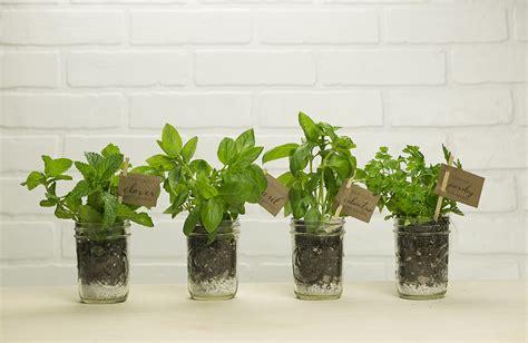 Indoor Herb Garden Kit Click & Grow Smart Herb Garden